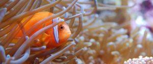 aquarium-tropical